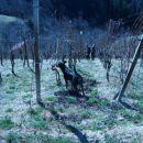 Klaj vinogradnik