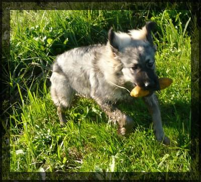Oktober 2008- Kana in Grom - foto