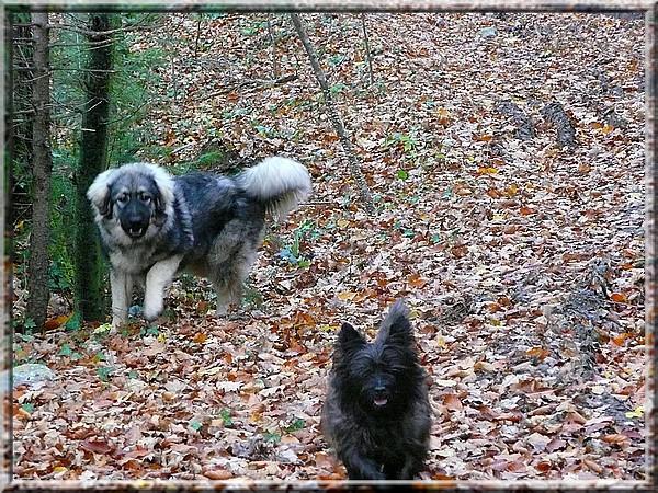 November 2008 (Grom-7mesecev,Kana-7let) - foto