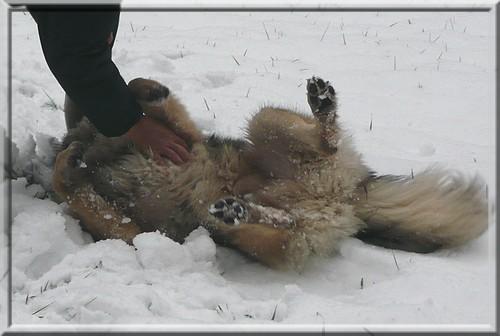 Gromov prvi sneg- 28.11.2008 - foto povečava