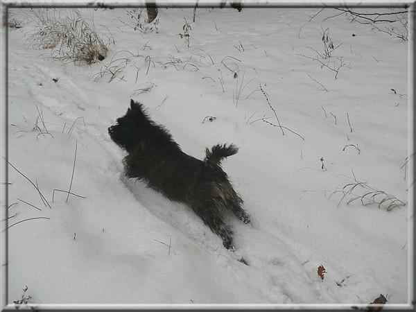 Gromov prvi sneg- 28.11.2008 - foto