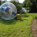 zorbing get you in  and ...