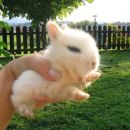 mali beli uhec