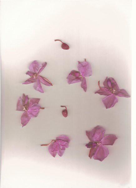 Les fleurs - foto