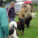 Pitt Mumlek, CAC, CACIB, BOB, izbor za najlepšega psa II. FCI skupine