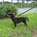 Thorov prvi sprehod, maj 2004