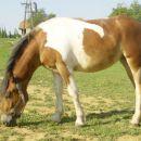 Moji konji
