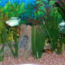 Akvari mora bit urejen