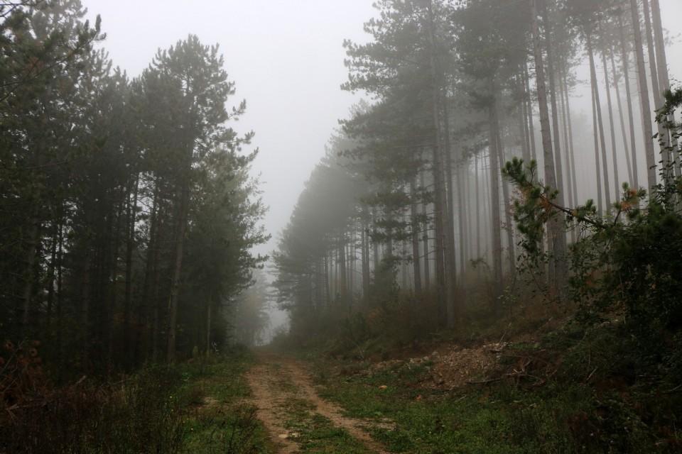 2018_10_16 Slivnica ( 1114 m )  - foto povečava