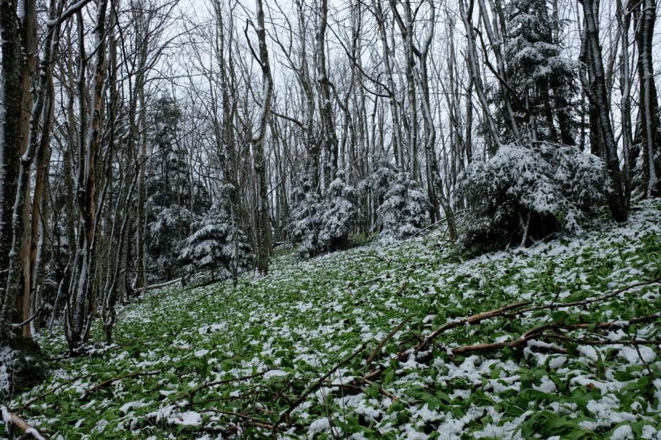 2019_04_13 Veliki Javornik - foto povečava