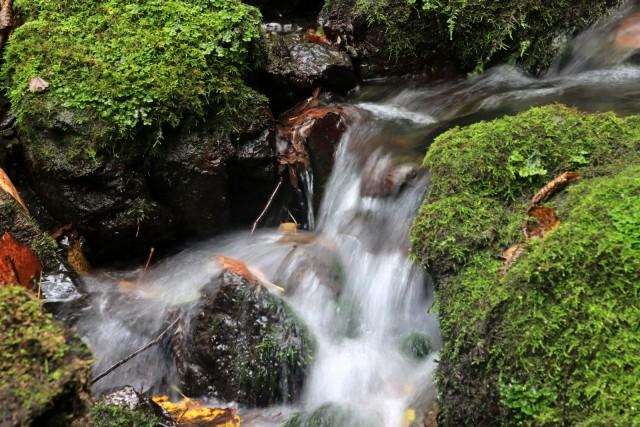 2020_09_23 potok pod Vranjo pečjo - foto