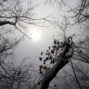 2020_12_13 Lisca - malo megle, malo sonca