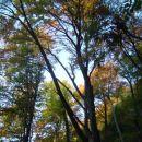 jesen razlita po drevju