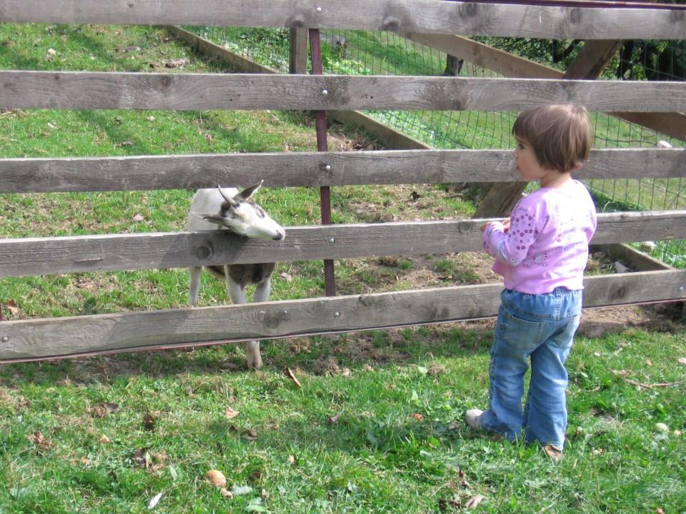 Bambino 1. srečanje 2008 - foto povečava