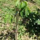 3letna rastlina