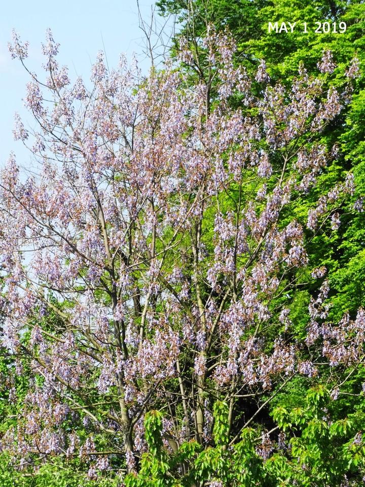 Moje grmovje - foto povečava