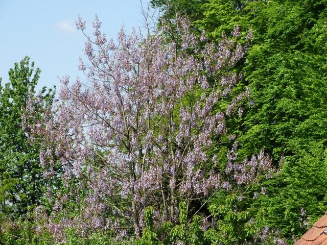 Moje grmovje - foto