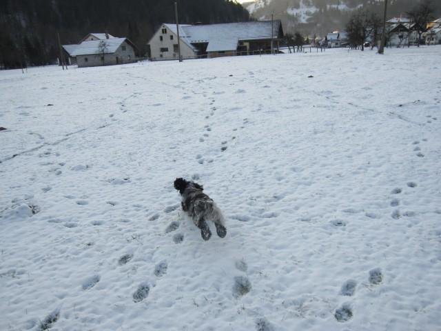 Bella na snegu 26.12.2008 - foto