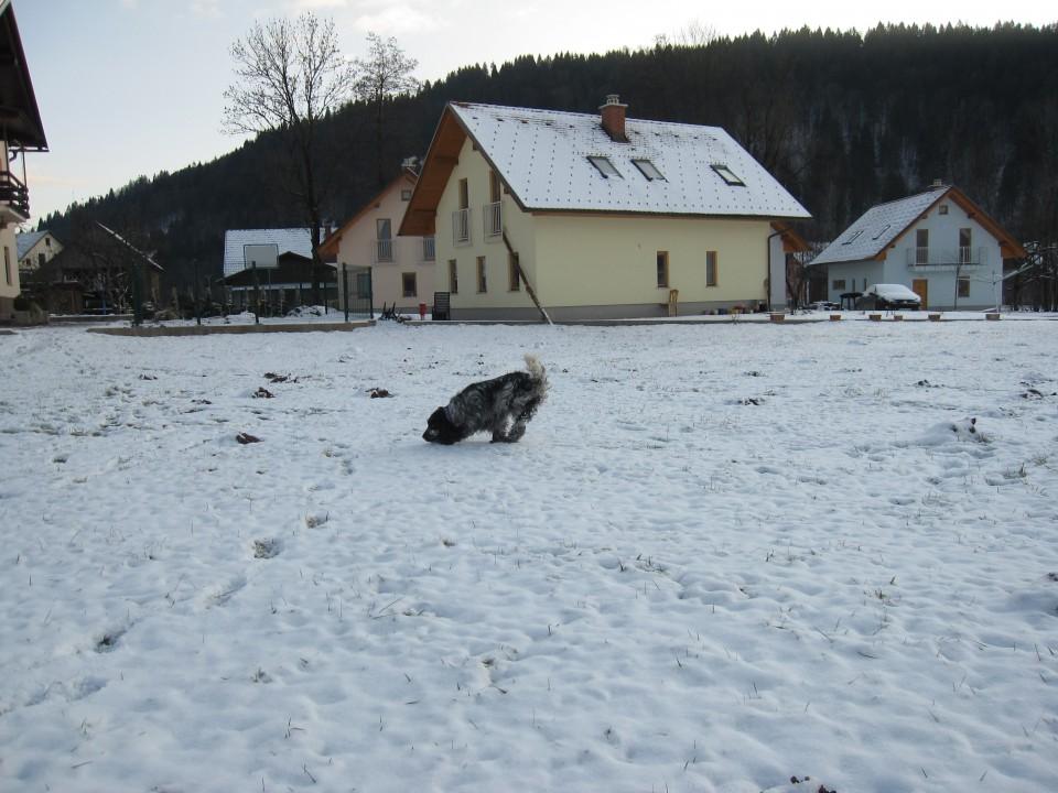 Bella na snegu 26.12.2008 - foto povečava