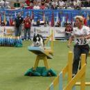 Svetno prvenstvo v agilitiyu. Španija 2005 Valladolid. Agility individual 35 mesto od 199
