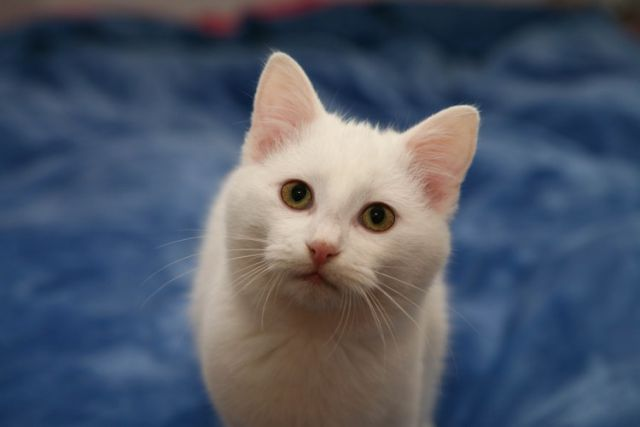 Mačke 46 - foto