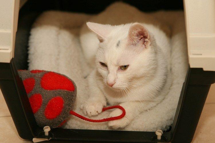 Mačke 64 - foto povečava