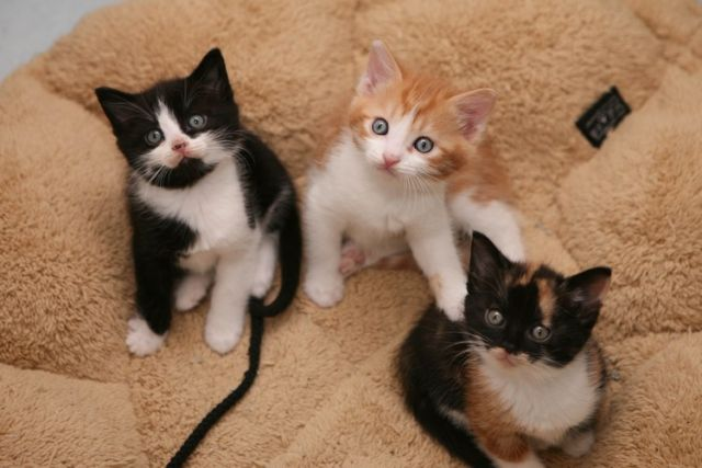 Mačke 64 - foto
