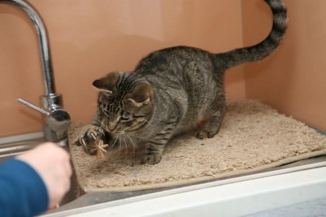 Mačke 76 - foto povečava