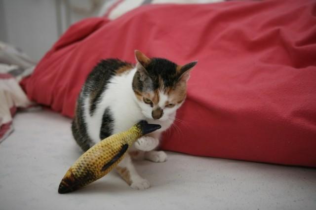 Mačke 76 - foto
