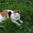 mačke 86