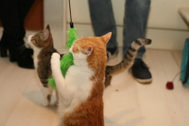 Mačke 89 - foto