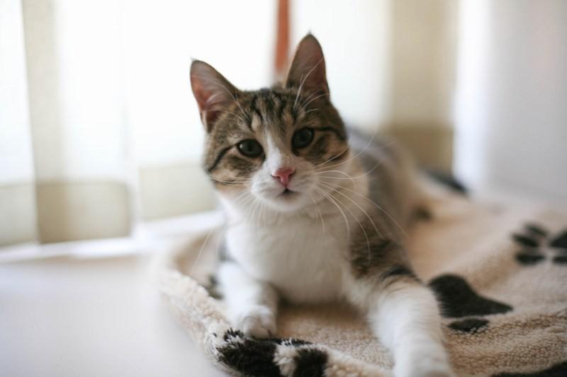 Mačke 89 - foto povečava