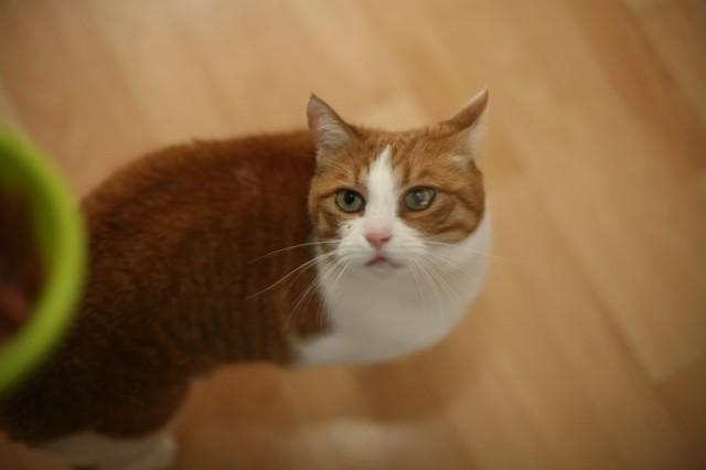 Mačke 90 - foto