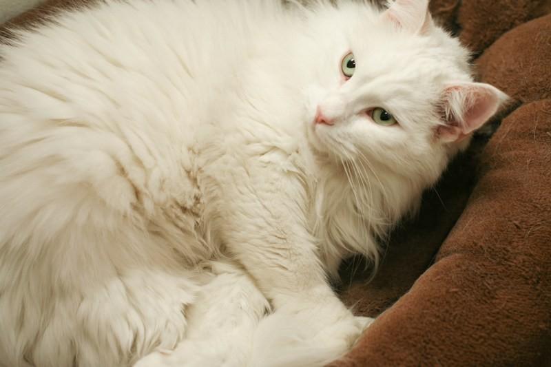Mačke 90 - foto povečava
