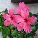 vrt,rožce