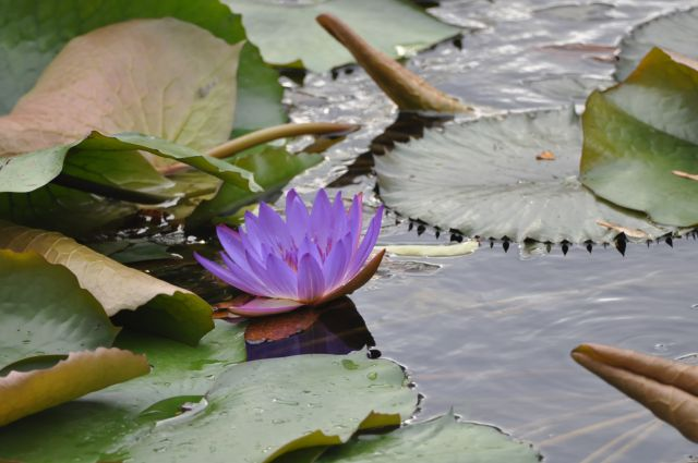 Rastline - foto
