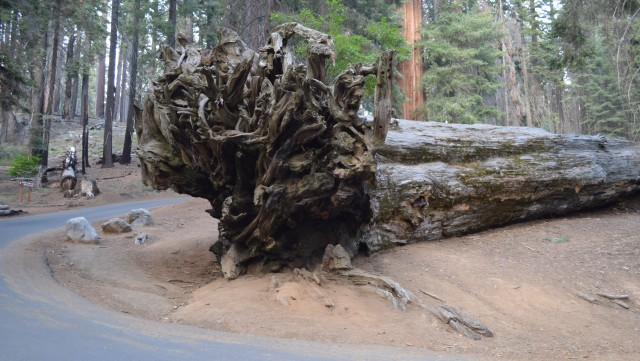 Potep po zda - sekvoja narodni park - foto
