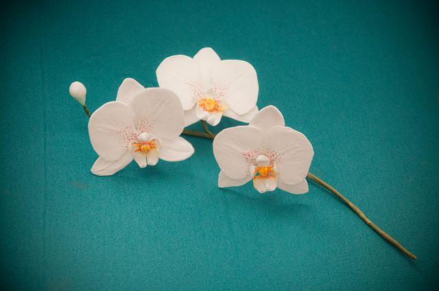 Še malo sladkih orhidej