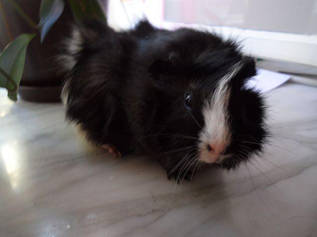 Stella - foto