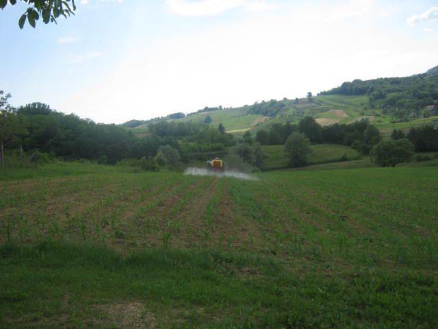 Prskanje kukuruza 2012 - foto