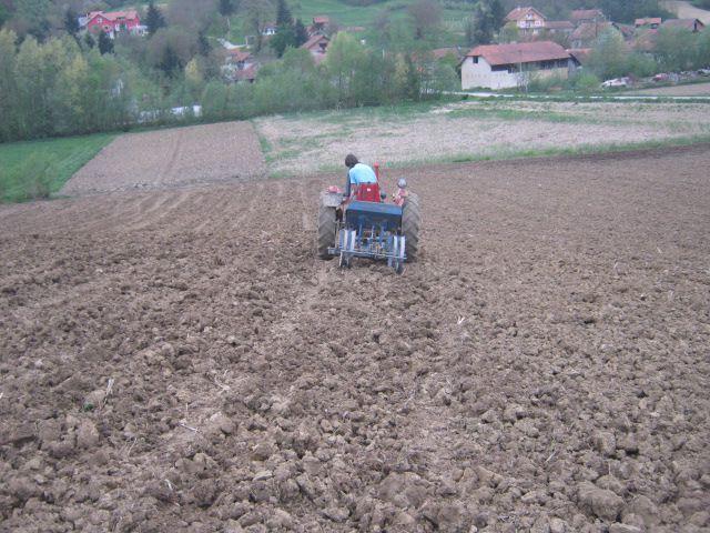 Sjetva kukuruza 2013 - foto