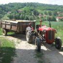 žetva pšenice 2013