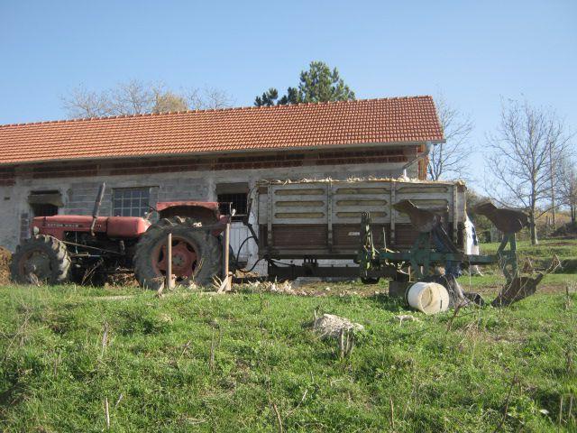 Kukuruz 2013 - foto