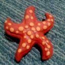 Morska zvezda 1