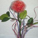 nežno rdeča vrtnica