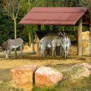ZOO safari -VERONA