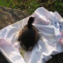 Ponirek Ferdo, 1.4.2008, spuščen na bajerju v Arboretumu Volčji Potok. Po pregledu pri vet
