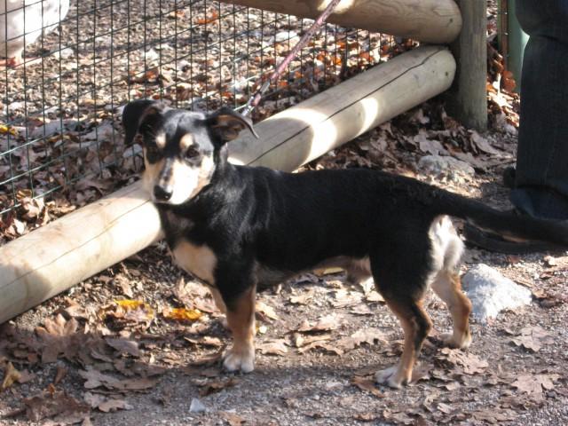 Pega, Skoki in Poco v ZOO 2008 - foto