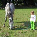 ostali konji