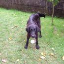 ta žoga je samo moja...